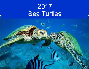 2017 Sea Turtles Calendar