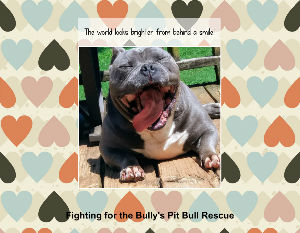 Fighting for the Bullys Pit Bull Rescue 2020