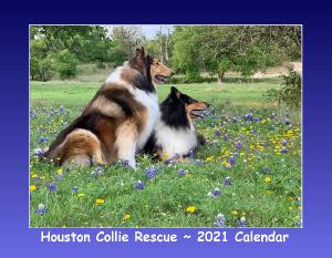 Collie Rescue - 2021 Houston Collie Rescue