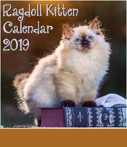 Ragdoll Kitten Calendar CD