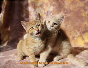 Wee3beasties: Saving the Strays 2018