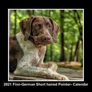 2021  Finn the German Short haired Pointer
