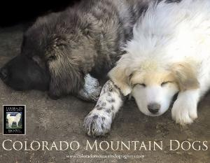 Colorado Mountain Dogs Calendar