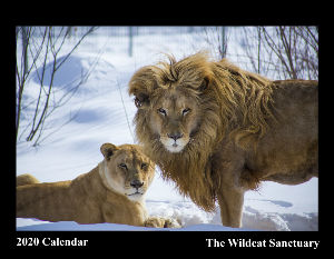 The Wildcat Sanctuary 2020 Calendar