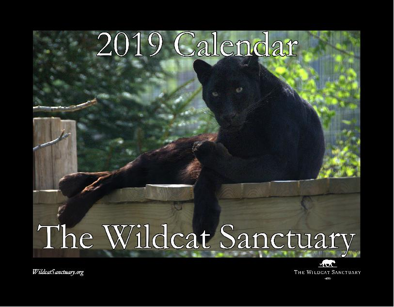2019 Wildcat Sanctuary