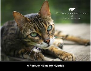 The Wildcat Sanctuary 2021 Hybrid Calendar