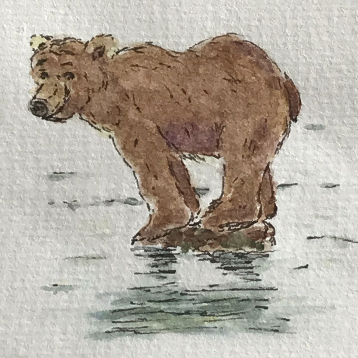 watercolorbearsketchesbyamanda