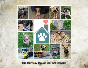 Halfway House Animal Rescue Calendar - Create Photo Calendars