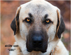 This map shows how many Anatolian Shepherd Dogs are posted in each state.